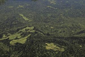 Algae - Brian Goodwin (Flickr)